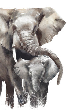 Elephants mama with baby watercolor painting illustration isolated on white background safari animals