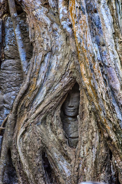 Nature versus man. A hidden smiling face, swallowed up by huge strangler fig tree roots, is all that remains of this stone statue in Ta Prohm, Angkor complex, Siem Reap, Cambodia