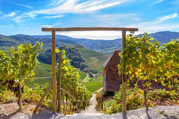 Wanderung durch die Weinberge zum Schloss Staufenberg, Schwarzwald