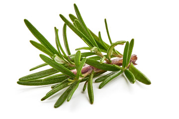 Rosemary branch, close-up, isolated on a white background