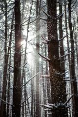 Winter Trees 16