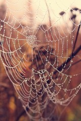 autumn spider web in the fog on a plant with droplets of water