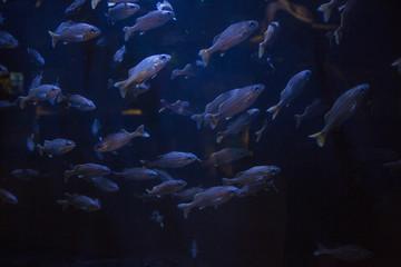 School of coral reef fish