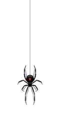Black spider hanging on a web isolated on white background. Vector design element.