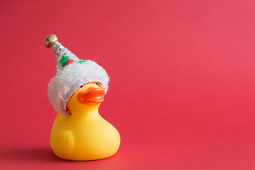 Christmas rubber duck toy for swimming on red background.