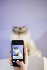Cropped hand of woman photographing cat with smart phone sitting on table against wall at home