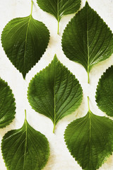 Overhead view of perilla leaves on white table