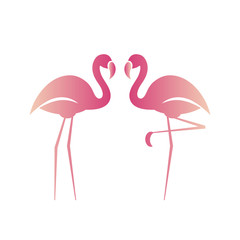 Two pink flamingos. Vector illustration.