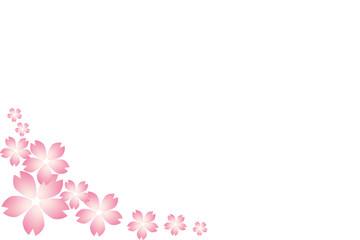 Beautiful Japanese cherry, Flower background card, cherry blossom. Pink Sakura isolate white background