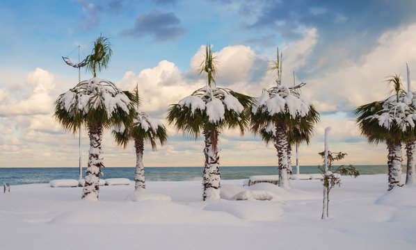 Snow covered palm trees