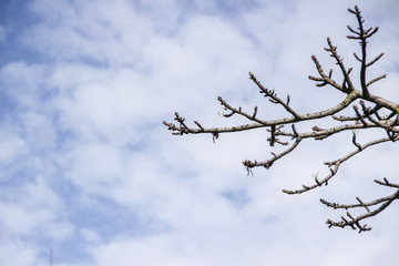 leafless branches with cloudy blue sky
