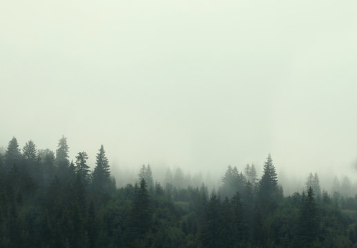 Picturesque view of mountain forest covered with fog