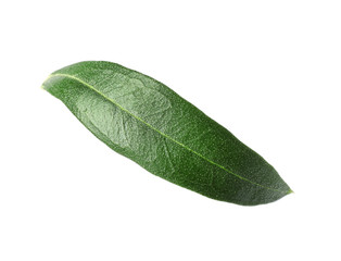 Fresh green olive leaf on white background