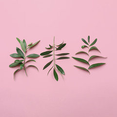 Twigs with fresh green olive leaves on color background, flat lay
