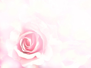 pink flower with blurred background