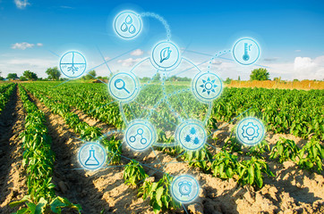 Modern farming. field of vegetables on a sunny day. Fresh green greens. Innovations and developments in agriculture. Scientific work and selection, crop forecasting and condition analysis.