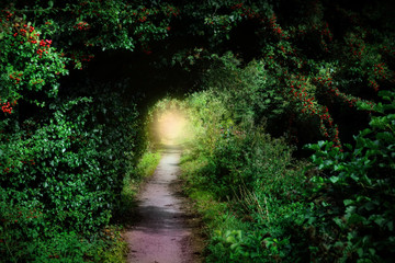 Forest path to paradise light