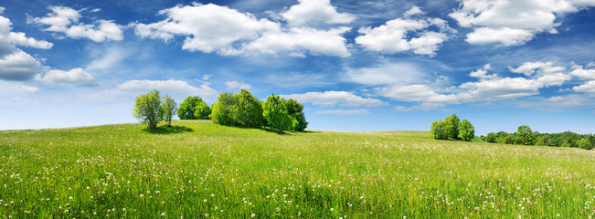 Wall Mural - Green field panorama and blue sky with white clouds. Panoramic view to grass on the hill on sunny summer day