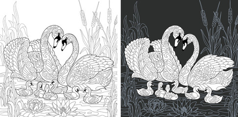 Swan family. Coloring Page. Coloring Book.