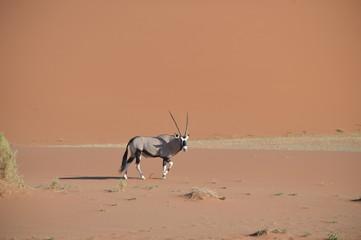 Fond de hotte en verre imprimé Bestsellers Oryx, Namibie
