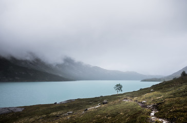 Small Birch in a Mountain Lake Landscape.