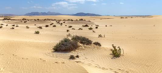 Corralejo Dunes with Volcanic Mountains in the Baclground in Fuerteventura, Canary Islands