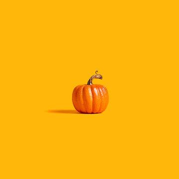 Autumn orange pumpkin on an orange background