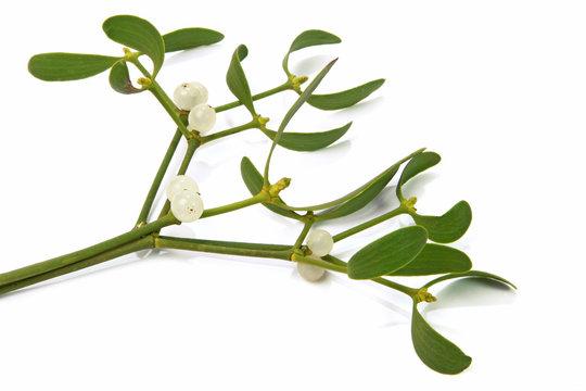Branches de gui