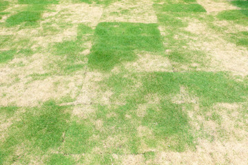 Green grass and dry grass pattern background