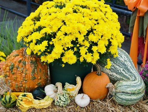Pumpkins, gourds and squash sitting around a pot of yellow mums on top of hay.