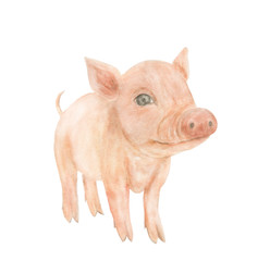 Watercolor painting a cute pig. Symbol of 2019 year