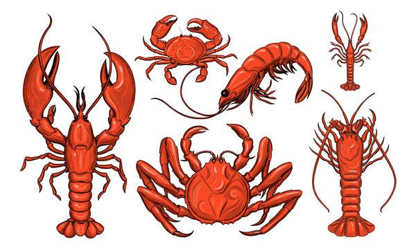 Crab, shrimp, lobster, langoustine, spiny lobster. Seafood.