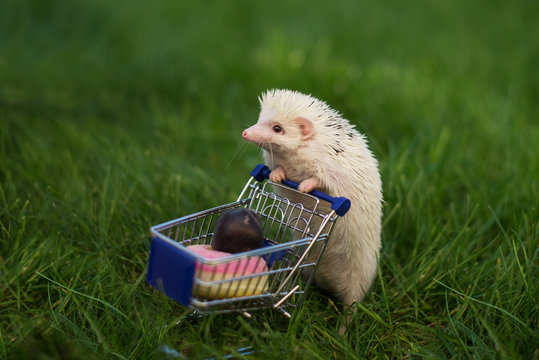 hedgehog with shopping trolley