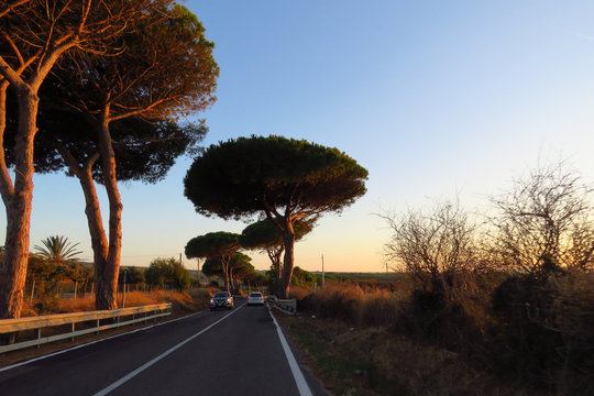 Big pine trees by the side of the road at sunset when driving to a new destination, Sardinia, Italy