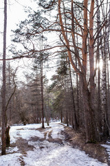 Image of snow trail and trees in forest
