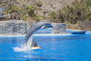 Papiers peints Dauphin Dolphins show in a pool.