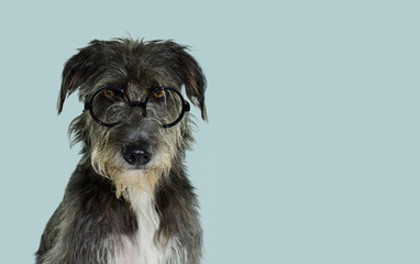 PORTRAIT OF A BLACK MIXED BREED DOG WITH SERIOUS EXPRESSION WEARING GLASSES. ISOLATED AGAINST COLORED PASTEL BLUE BACKGROUND. STUDIO SHOT WITH COPY SPACE.