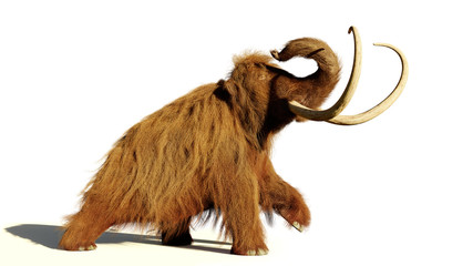 woolly mammoth, walking prehistoric mammal isolated with shadow on white background (3d illustration) Wall mural