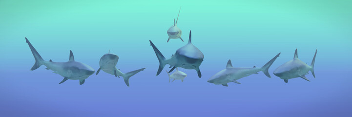 group of silvertip sharks