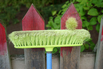 Broomstick and Chestnut