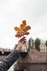 Autumn leaf. Season autumn