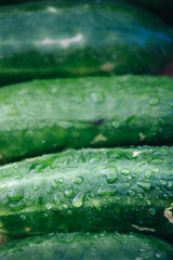 Cucumbers Stacked Together with Dew
