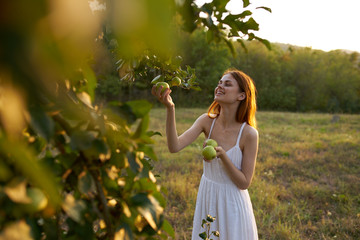 woman on the nature picking apples from trees