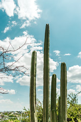 Cactus, tree branches and blue sky