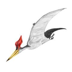 プテラノドンは最もよく知られた大型の翼竜で、特徴的な鶏冠の形態によって、いくつかの種類に分かれている。このイラストはステルンベルギ種を描いている。白亜紀後期北米からイギリスに広く生息していた。白亜紀後期には他の翼竜類が少なくなり、白亜紀後期の制空権を握っていた。