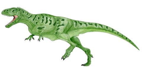 カルカロドントサウルス 白亜紀前期から中期にかけて北アフリカに生息した最大級の肉食恐竜。大きいものは14メートルの体長を有したと思われる。ティラノサウルスの頭骨が幅が広く、頑丈であったのと比べるとこの恐竜の頭骨は非常に狭く、歯は三角状で薄く鋭い。サメの歯に似ていることからカルカロドント(サメの歯をもつ)と命名された。イラスト