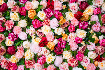 spring and summer concept - close up of flowers wall background with colorful roses and peonies