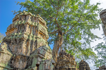 Tower of the temple Ta Prohm and ficus strangler. Angkor Thom. Cambodia