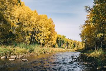 Autumn landscape. Forest, river, stones, rock, leaves.