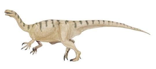 プラテオサウルス 三畳紀後期の竜脚類の原形(原竜脚類)。西ヨーロッパで発見されたもっとも有名な原竜脚類。前脚の親指の爪が発達しており、4足歩行では邪魔になるため、尾でバランスを取りながら2足歩行も行ったとされている。前脚の鉤爪は後ろ足で立ち上がった際、高い木の枝を引掛けるのに適しており、草食性の食性に利用したのかもしれない。学名は平らなトカゲ。背景のないイラスト。